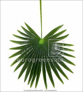 Artificial leaf palm Livistona 90 cm