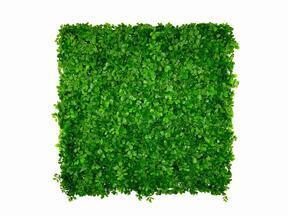 Artificial leaf panel Fikus Microcarpa - 50x50 cm