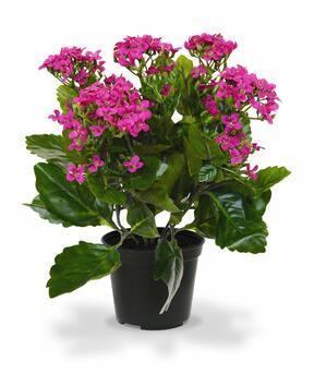 Artificial plant Kalanchoa purple 30 cm