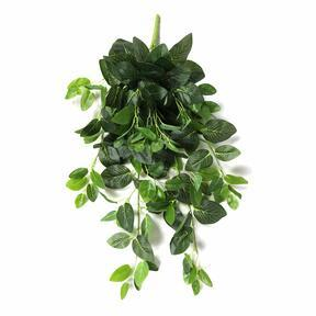 Artificial tendril Fitónia green 80 cm